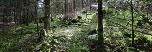 Naturschutzgebiet Obere Ilz